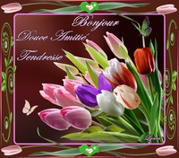 bonjour-douce amité-tendresse-tulipes de lynea