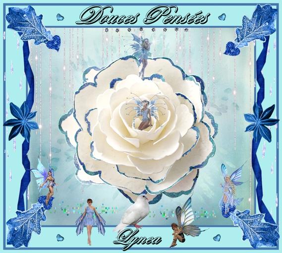 douces pensées la rose de lynea