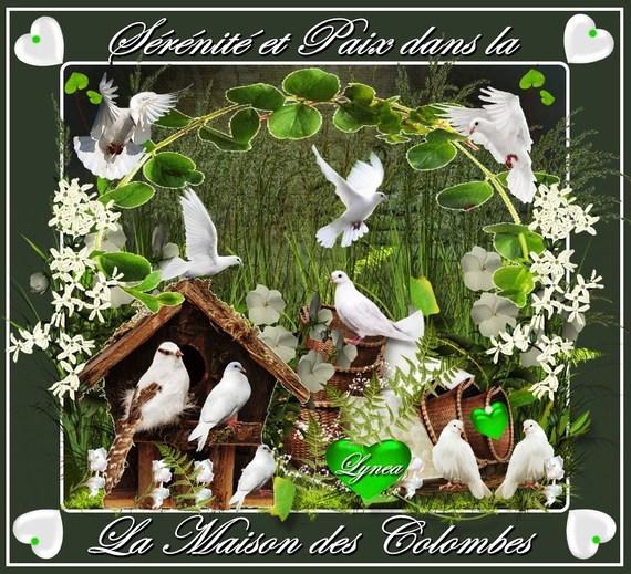 sérénité et paix dans la maison des colombes-lynea