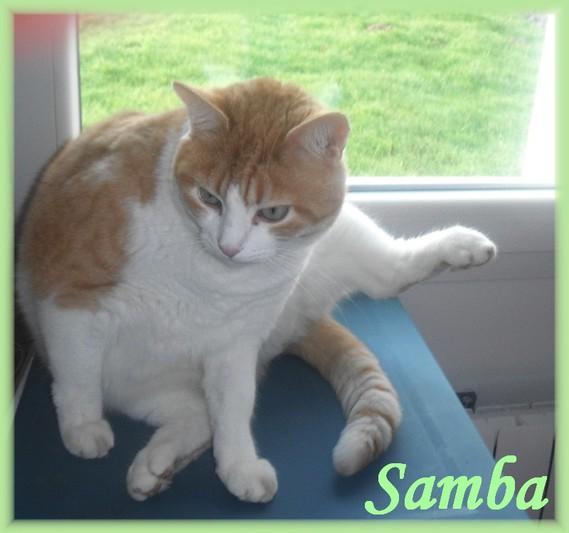 SAMBA-6 DSCF7074