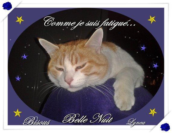 belle nuit -samba -lynea2015-01-06 23-11-09