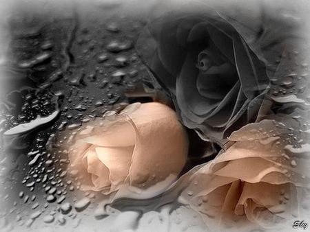 roses♥♥♥pour toi