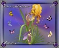 Bon Rétablissement--Bisous--Lynea