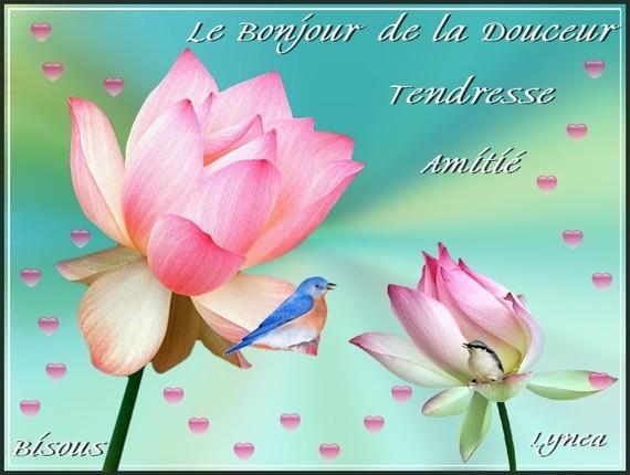 Bonjour de la Douceur-Tendresse-Amitié-Bisous de Lynea