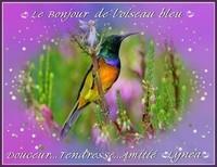 Le bonjour de l'oiseau bleu D-T-Amitié de Lynea