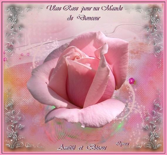 Une Rose pour un monde de Douceur-Amitié et bisous de Lynea