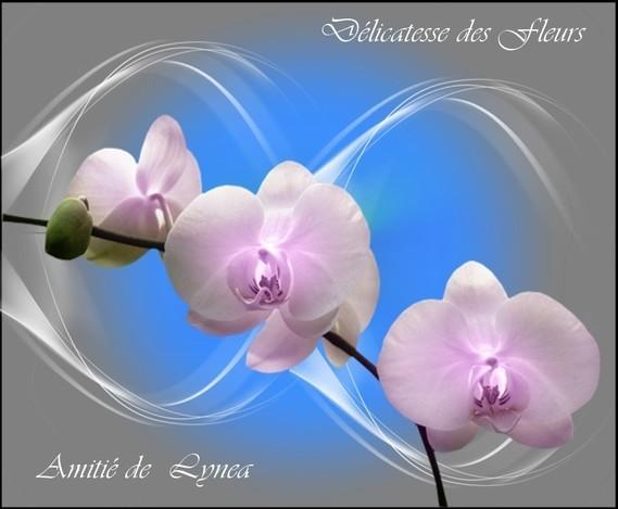 Délicatesse des fleurs-amitié de Lynea