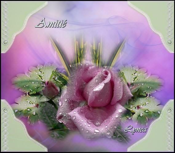 Amitié-La Rose-Lynea