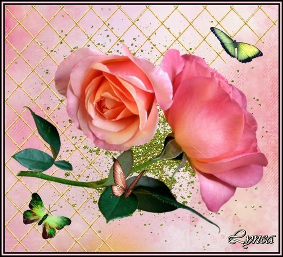 Rose de Lynea