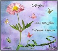 Bonjour avec une fleur moments douceur amitié bisous de Lynea