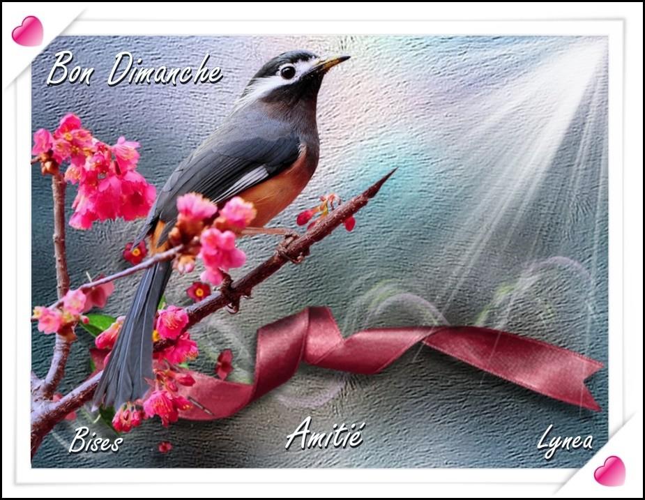 Bon dimanche bises amitié de Lynea - BON DIMANCHE - lynea18 - Photos - Club  Doctissimo