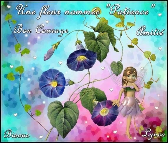 Bon courage fleur patience amitié bisous de Lynea