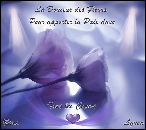Douceur des fleurs pour la paix dans tous les coeurs bisesde Lynea