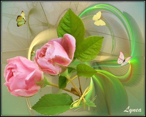 Roses papillons de Lynea