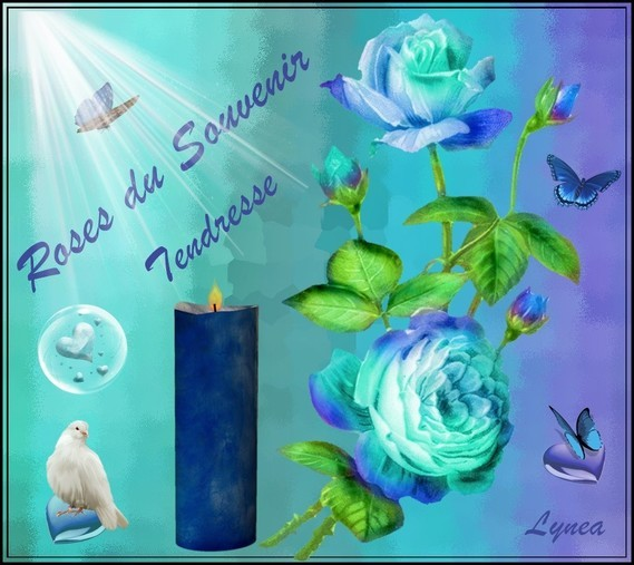 Roses du Souvenir Tendresse de Lynea