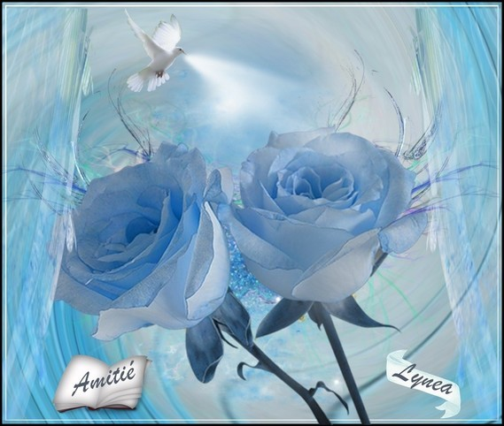 roses bleues amitié Lynea