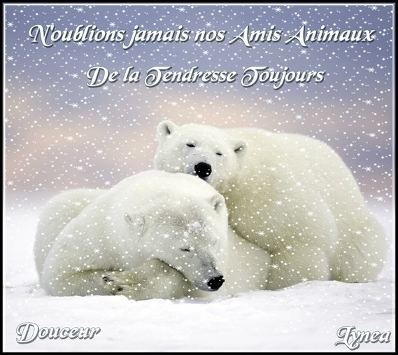 N oublions jamais nos amis animaux---de la tendresse toujours-douceur de Lynea