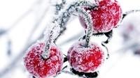 fruits neige
