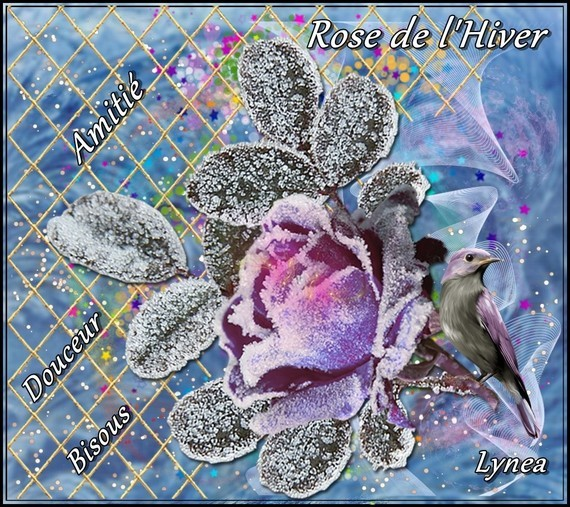 Rose de l'Hiver amitié bises douceur de Lynea