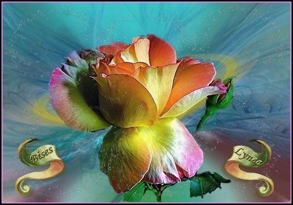 rose bises de Lynea