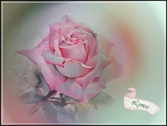 Rose Lynea
