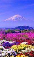 fleurs paysage