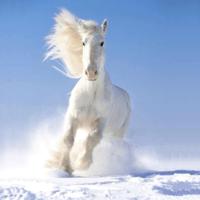cheval blanc...