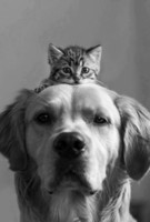 chat chien
