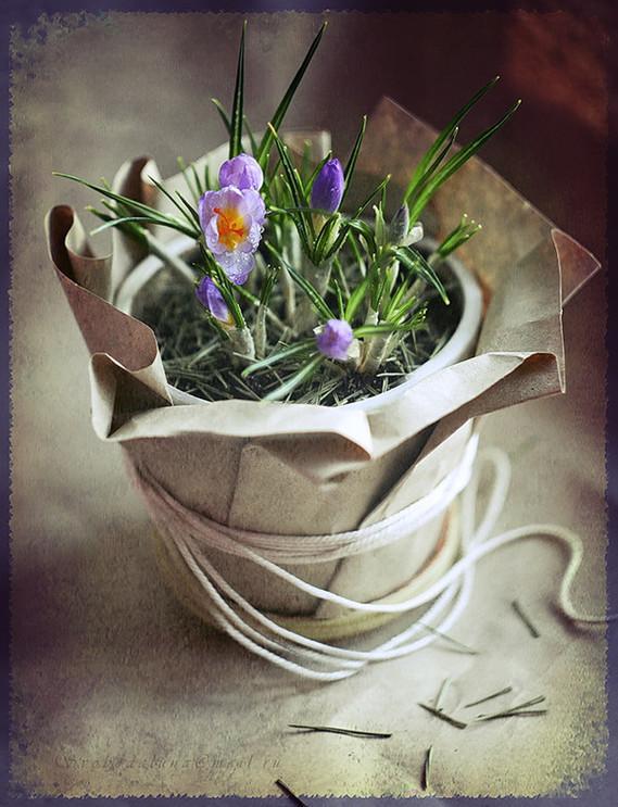 fleurs pots