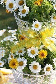 fleurs marguerites