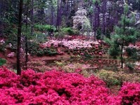 forêt fleurie