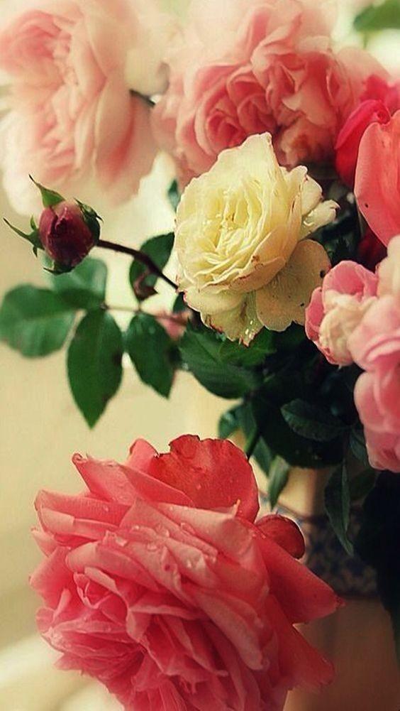 fleurs rouge jaune
