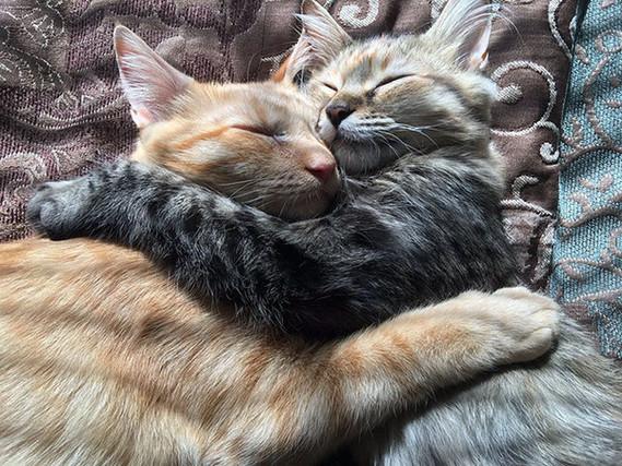 chats calins