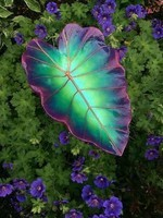 fleur feuille