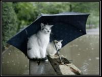 chats pluie