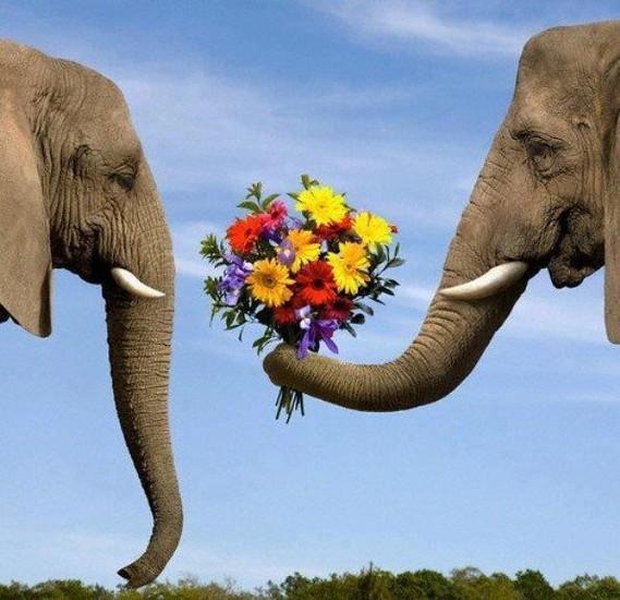 éléphants fleurs