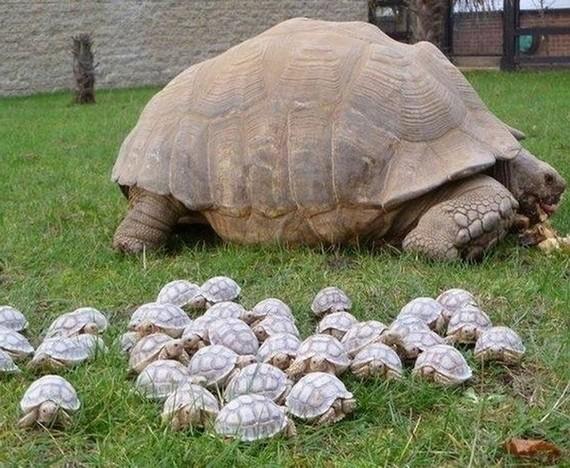 tortue et bébés