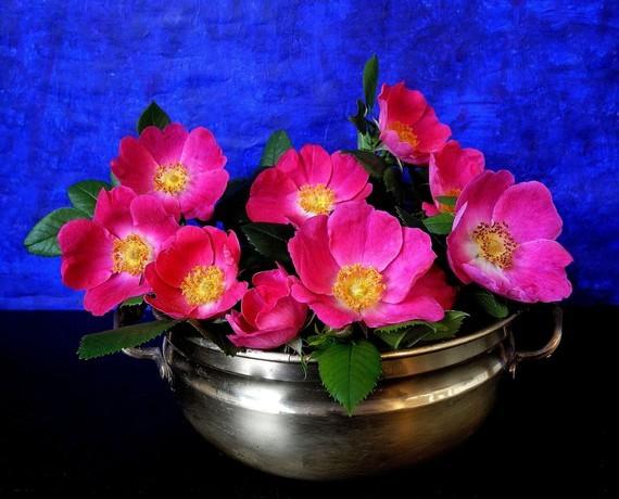roses vase