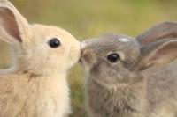 lapins