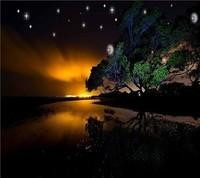 paysage la nuit