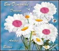 Bon Dimanche Douceur Amitié bisous fleurs blanches de Lynea