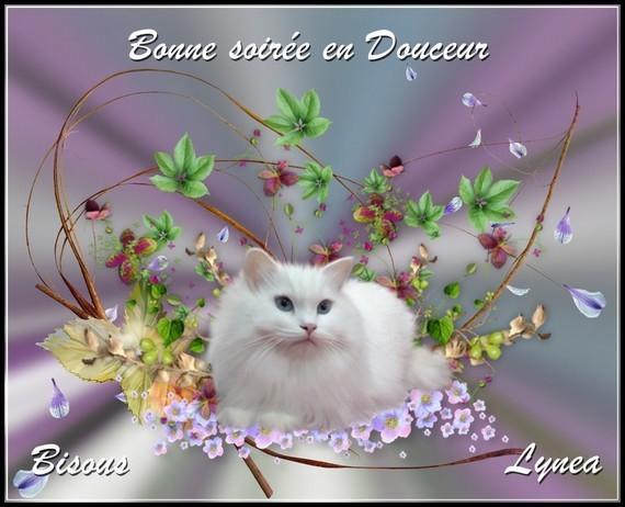 Bonne soirée douceur bisous de Lynea