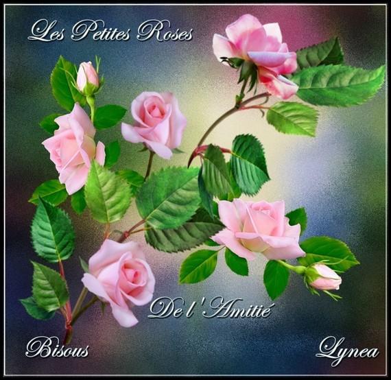 Amitié - les petites roses bisous Lynea