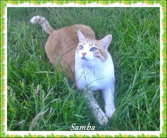 SAMBA-