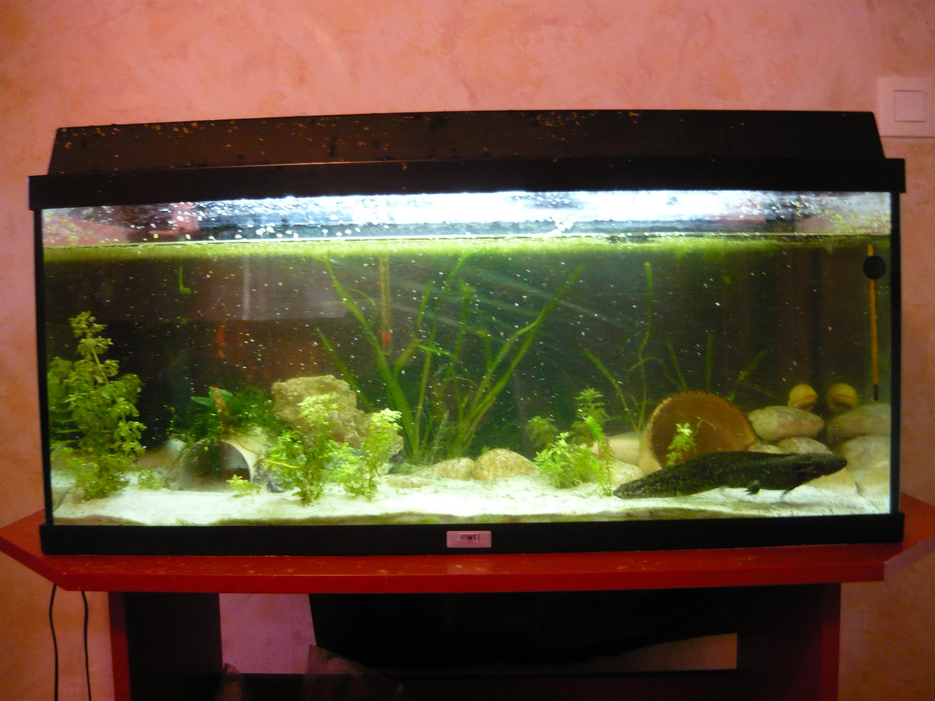 big-2005290648f Frais De Aquarium tortue Aquatique Schème