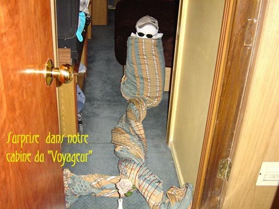 Surprise dans la chambre......