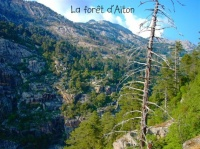 LA FORET D'AITON