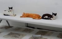 Mykonos ville des chats