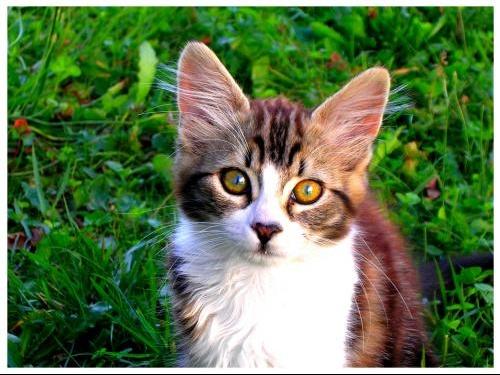 Mangue_My_Kittens_by_youpla_booom