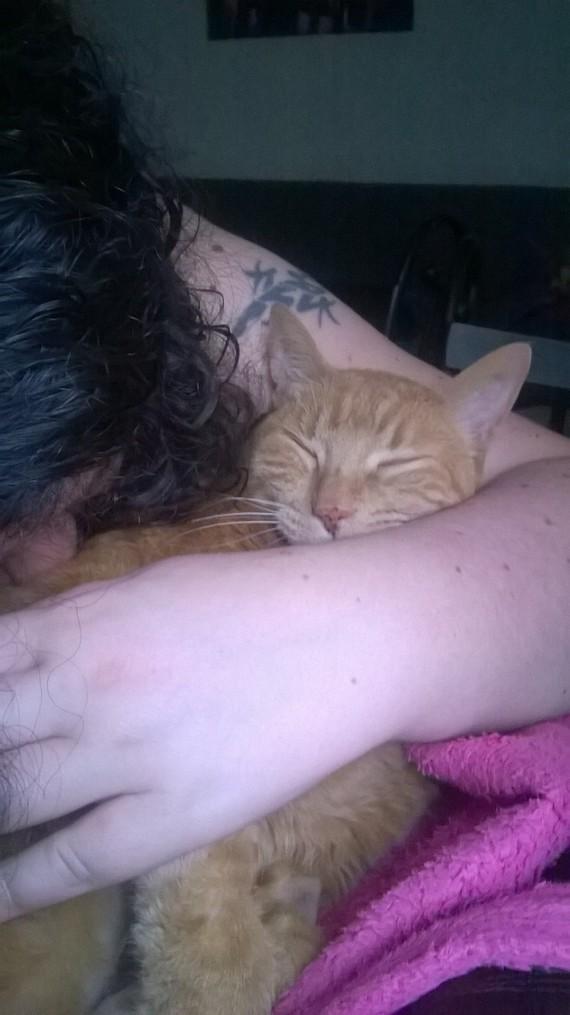 Dans les bras de maman je ronronne à nouveau !